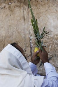 An orthodox Jewish man at the Western Wall during Sukkot. (Miriam Alster/FLASH90)