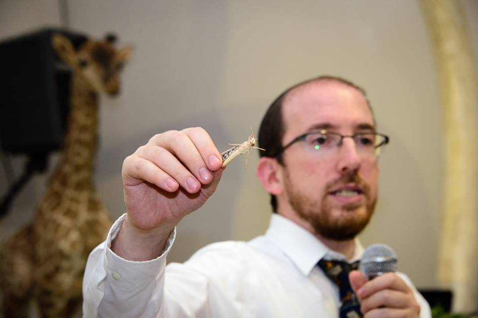 Rabbi Natan Slifkin holding a kosher locust (Mordechai Gordon/Biblical Museum of Natural History)